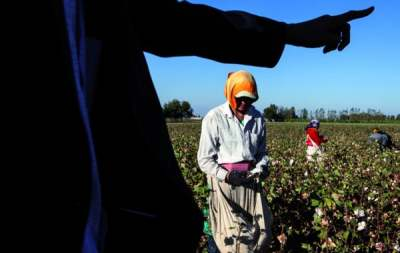 Image: Forced Labour in Cotton Production