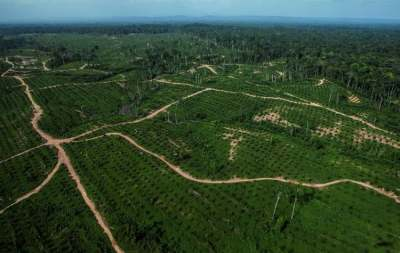 Image: Olam Palm Oil Plantations