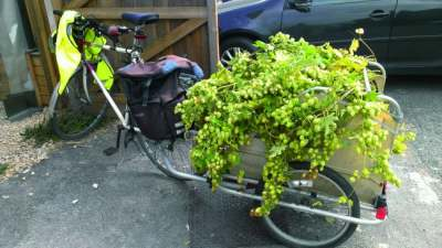 Image: Stroud Community Brewery bicycle hops