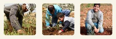 planting an olive tree