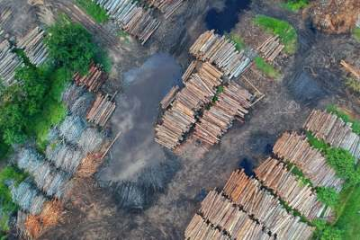 image: deforestation due to timber