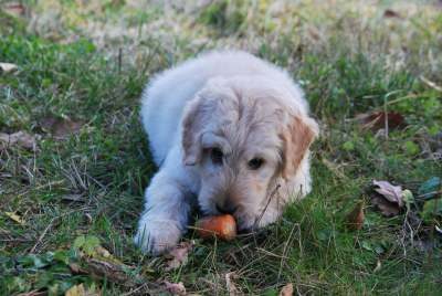 image: dog with carrot ethical consumer