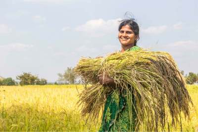 Image: female rice worker india