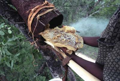 ethical-honey-honey-comb-bee-hive-zambia-tropical-forest