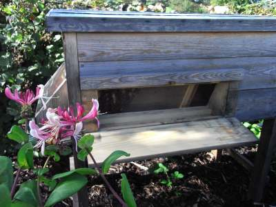 image: wooden beehive with bees inside with pink flowers in the left foreground