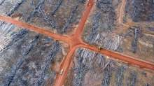 Image: Deforestation palm oil