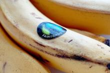 Image: Fairtrade bananas