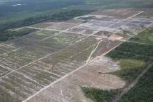 Image: palm oil deforestation labelling