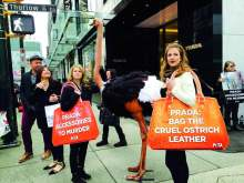image: protest against prada ostrich in street text: prada accessories to murder