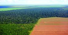 image: rainforest cleared brazilian cerrado to cultivate soya for animal feed