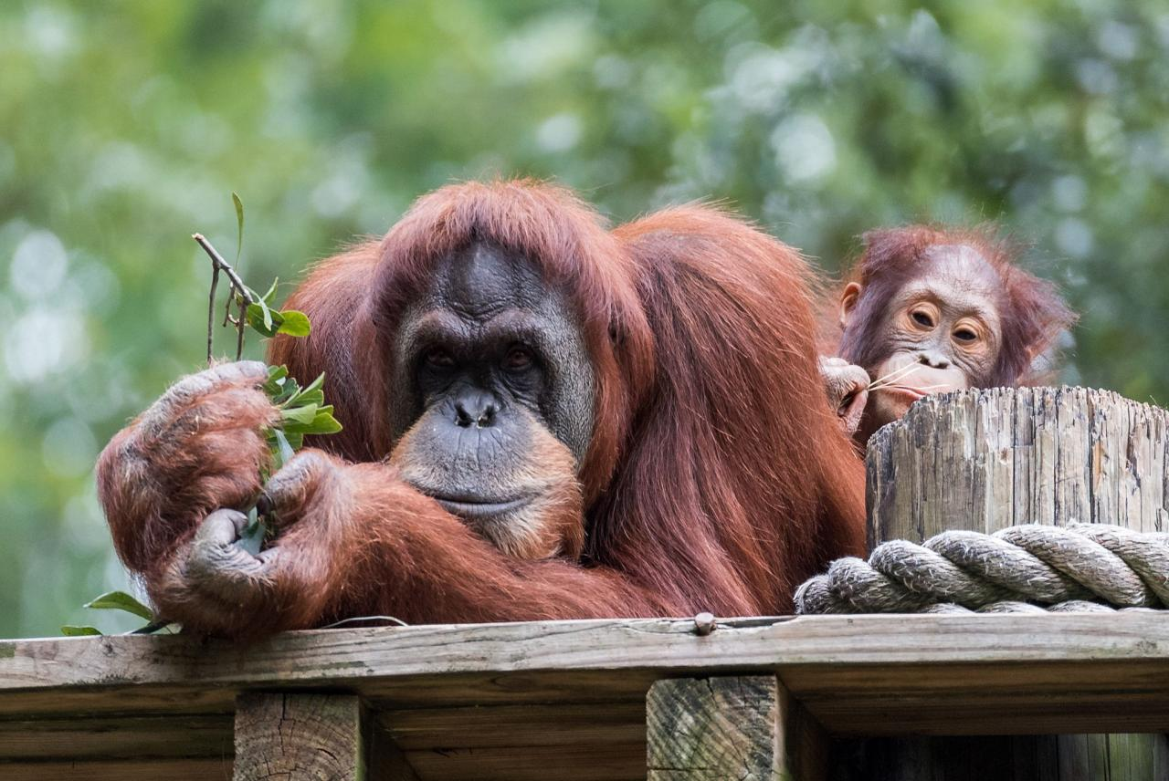 Palm Oil and Consumers | Ethical Consumer