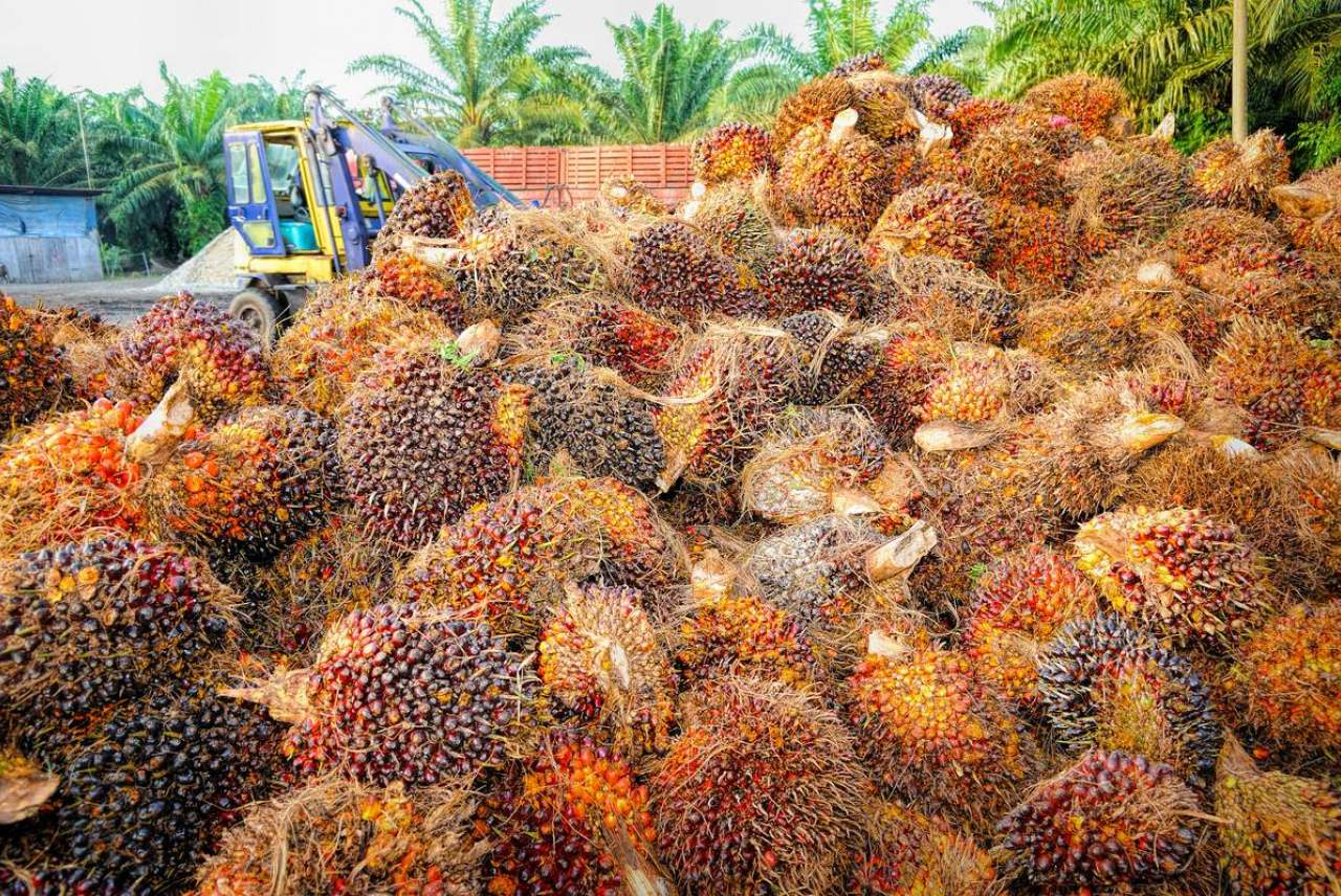 image: palm oil fruit all piled up in mass brands and companies that use palm oil