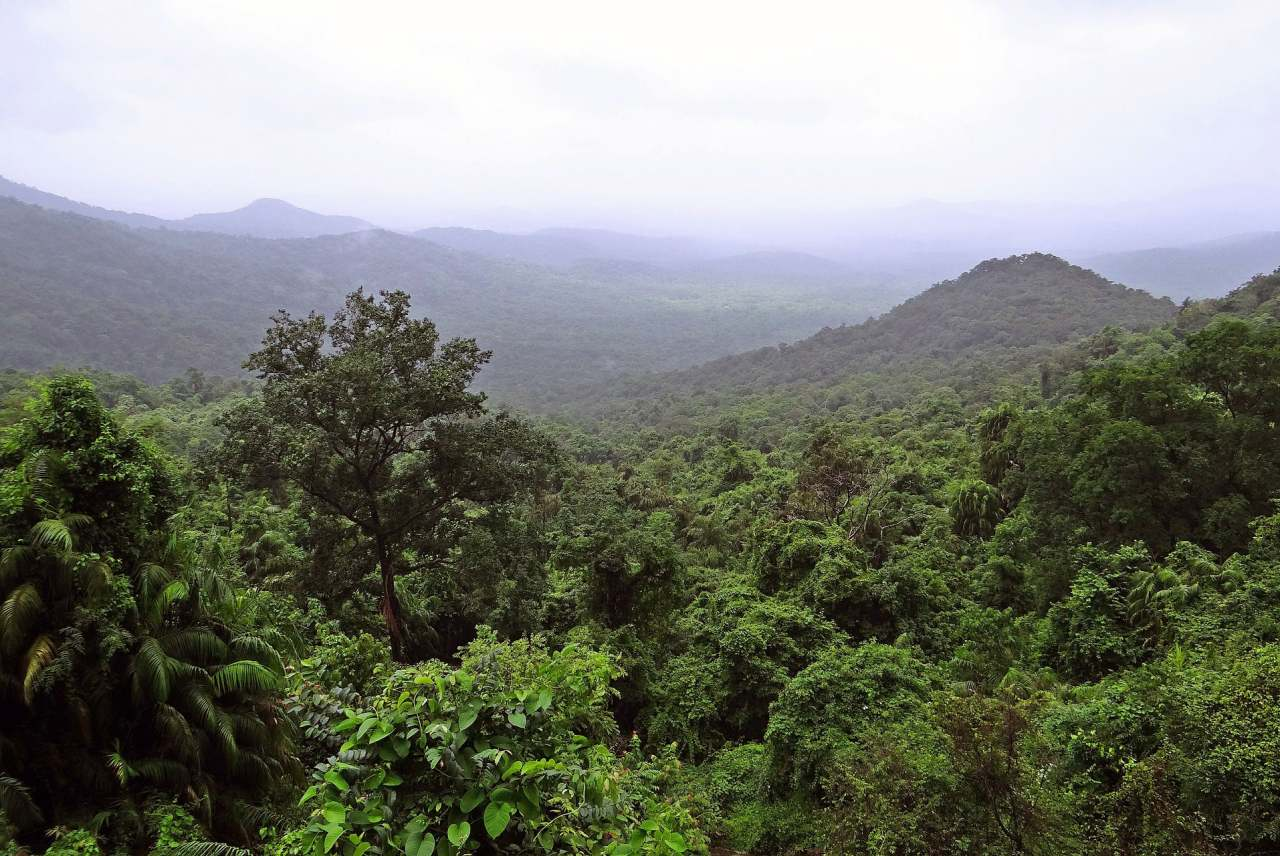 rainforest-alliance-limitations-rainforest-that-could-be-affected-ethical-consumer