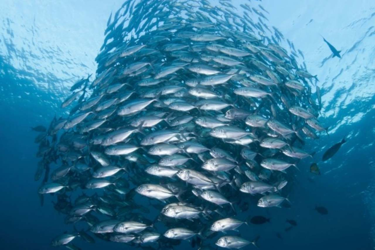 Image: tuna shoal msc certified low bar