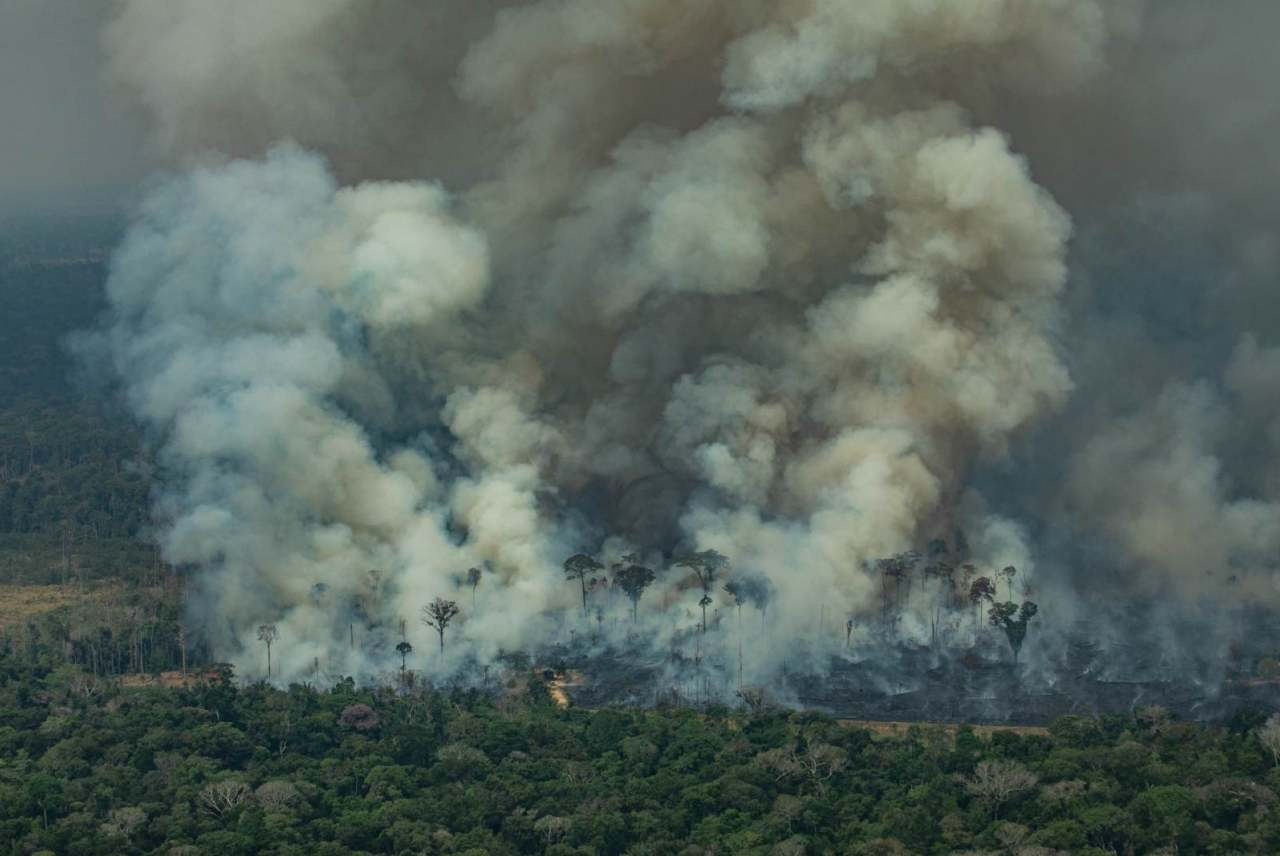 image: the amazon forest on fire due to companies