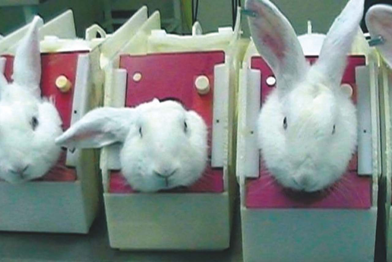 image: animal testing rabbits in boxes cosmetics toiletries ethical consumer