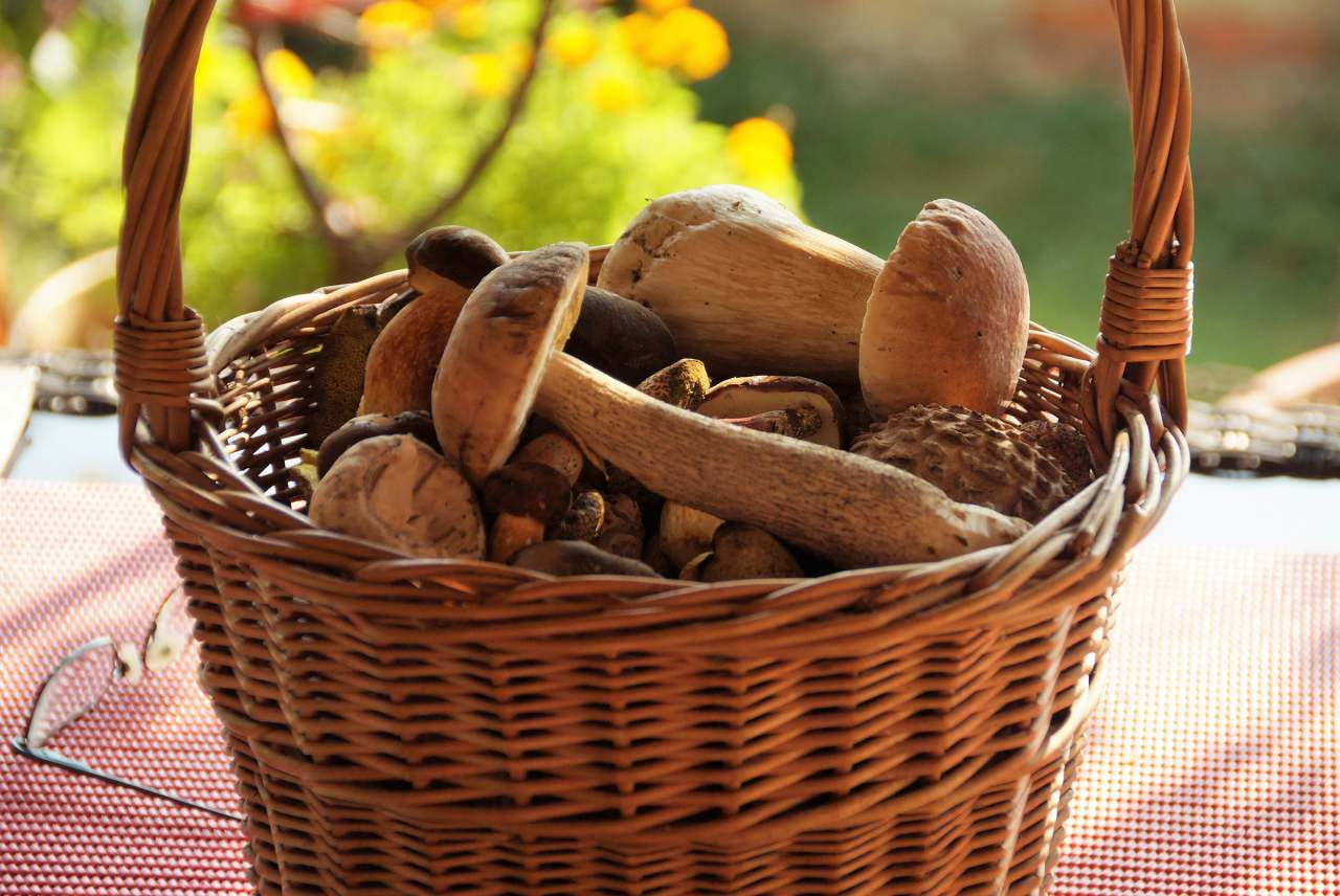 image: basket full of mushrooms autumn foraging woven basket