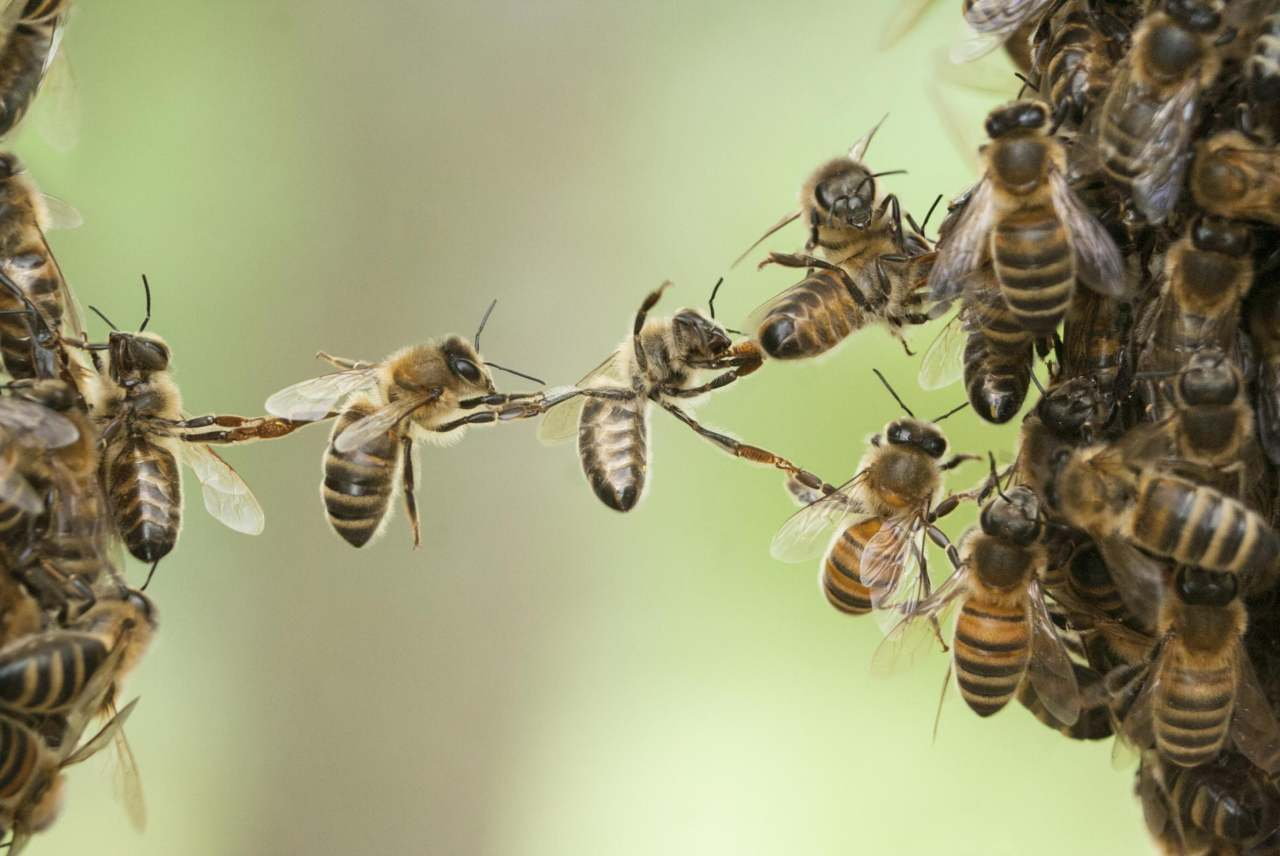 image: bees working together uk pesticides