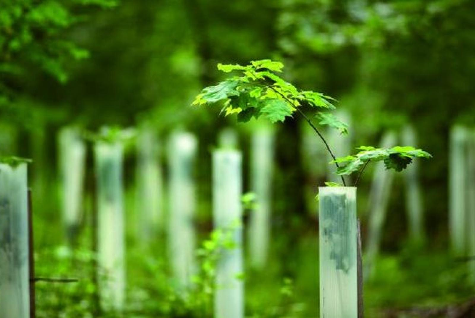 A Short Guide to Carbon Offsets