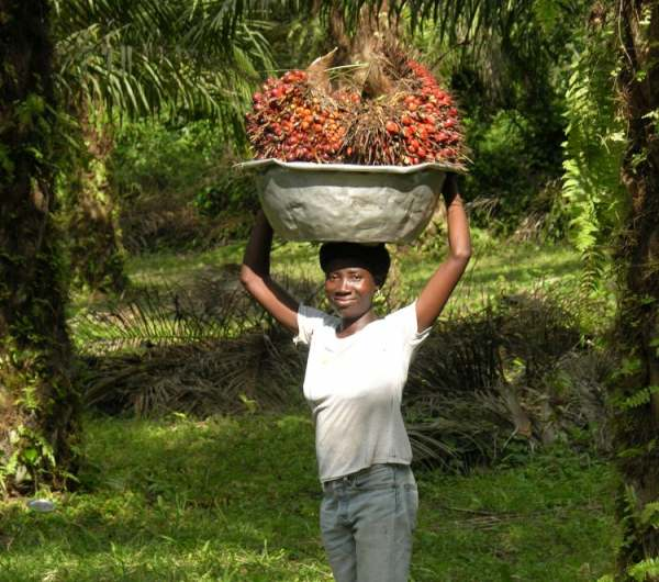 Image: palm oil producer