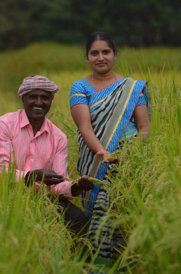 Image: female rice worker india couple in rice paddy