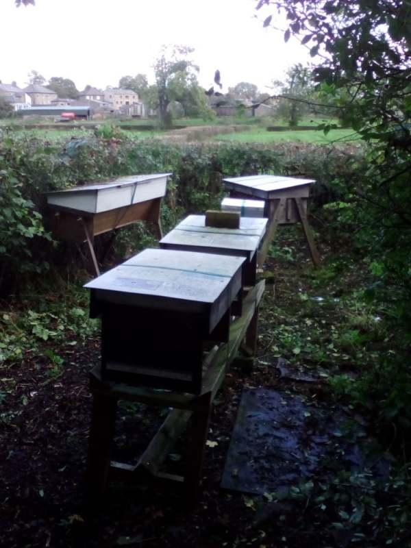 image: beehives arranged in clearing outside in north yorkshire